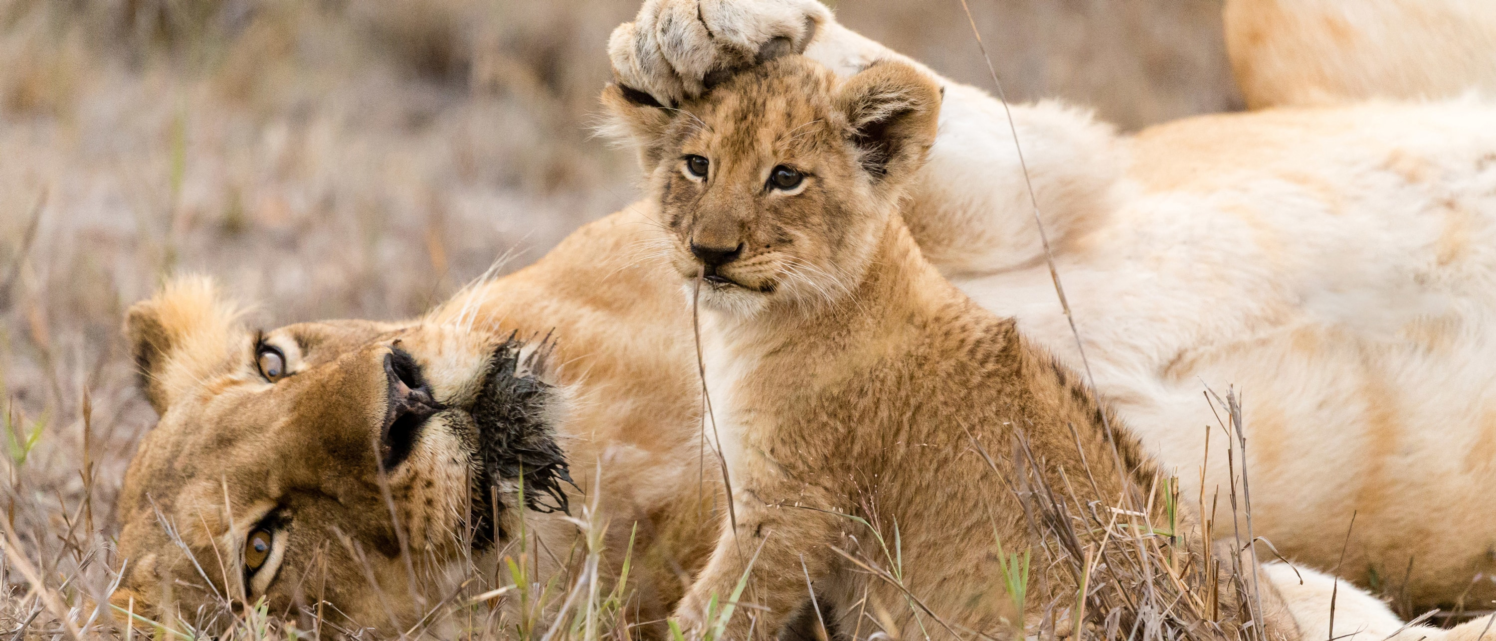 South Africa Safari Amp Tours Adventures By Disney