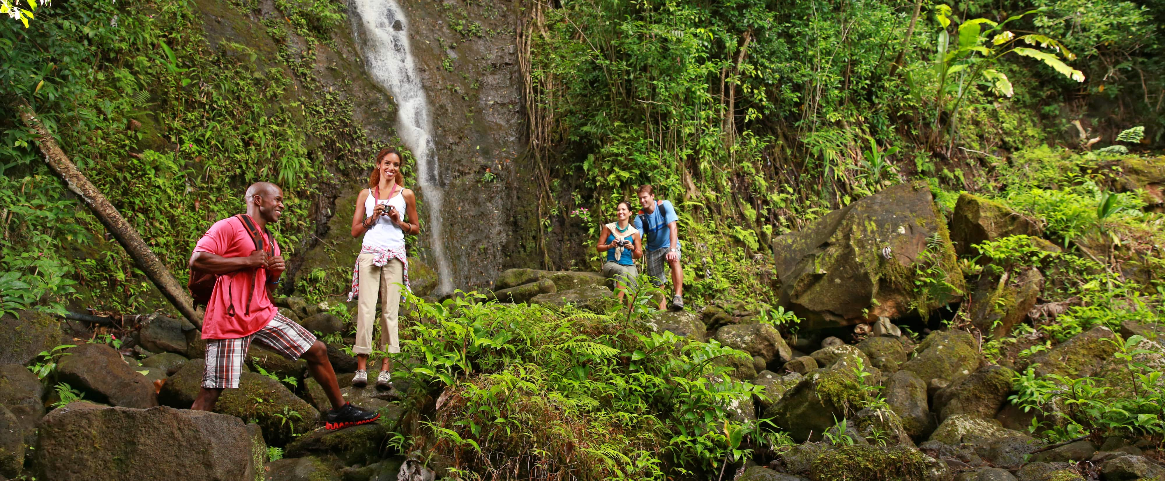 Couples admire a waterfall in the rainforest
