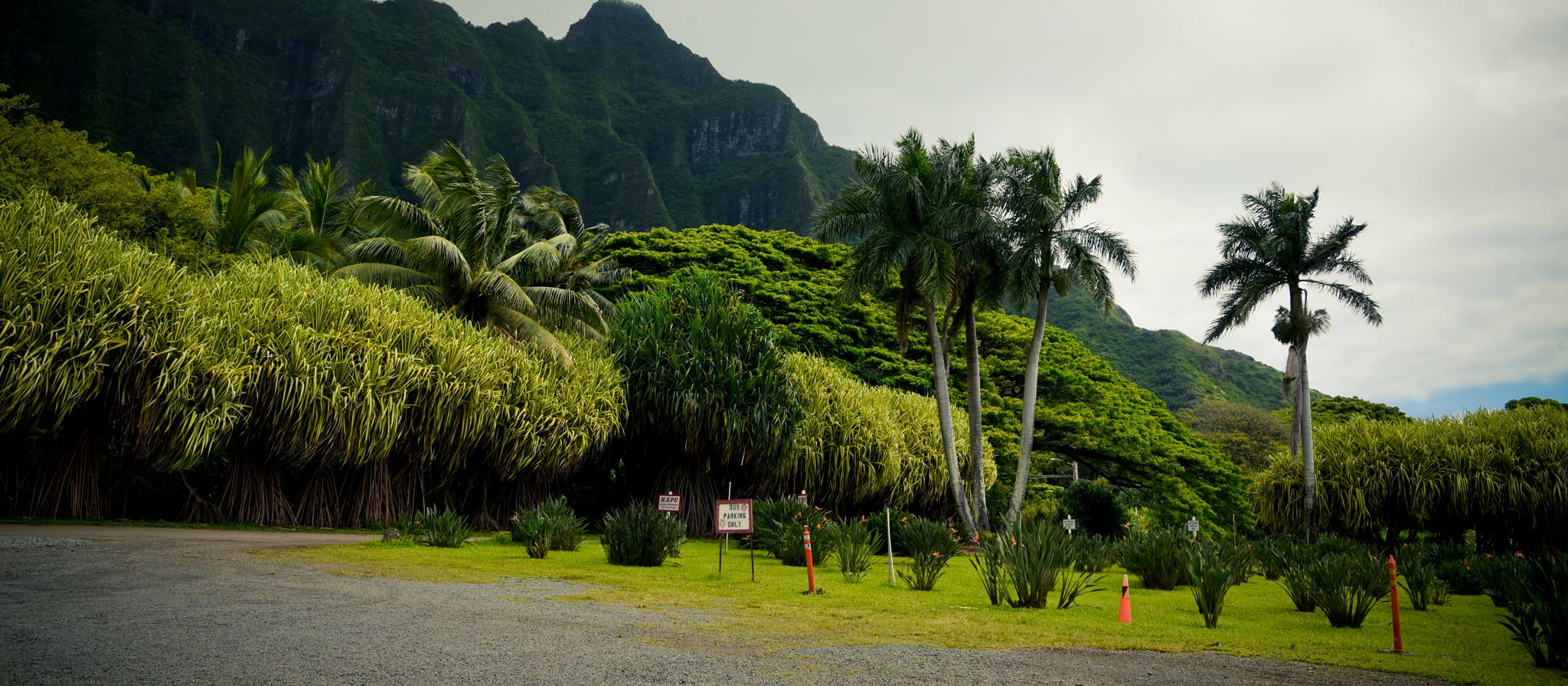 Tropical trees and windswept vegetation at the base of jagged mountain peaks
