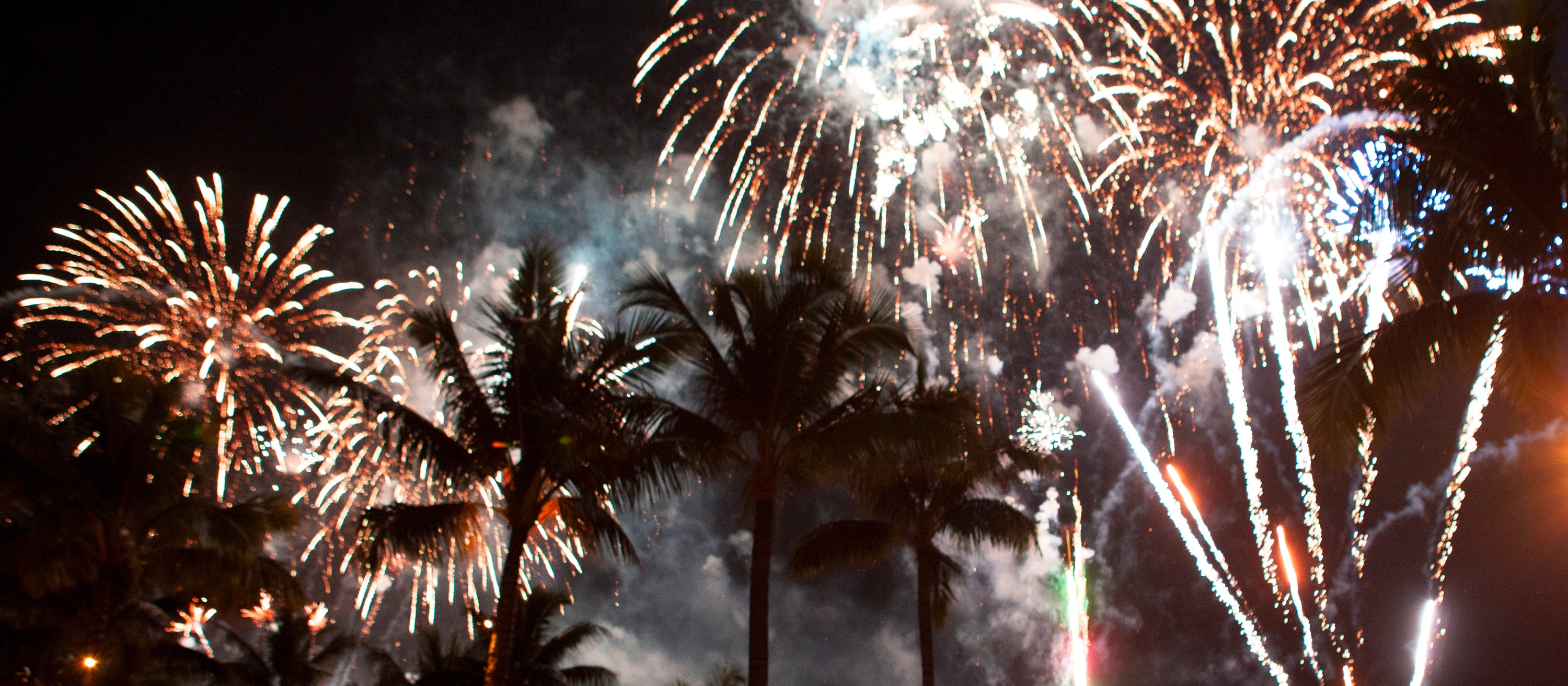 Several bursts of fireworks fill the night sky above a line of palm trees