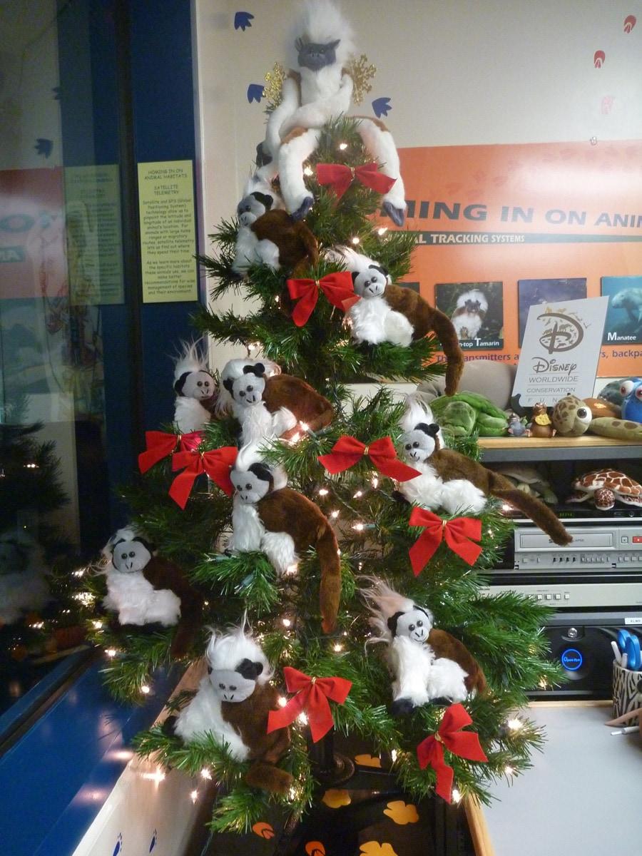 Disney 12 Days Of Christmas.Celebrating 12 Days Of Christmas And Conservation Disney
