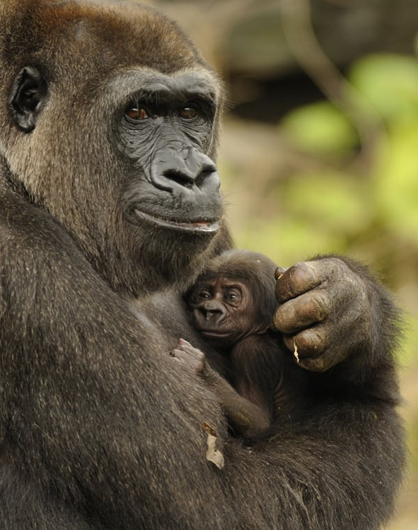 Kashata with her new born at Pangani Forest Exploration Trail