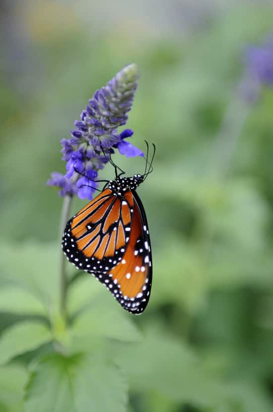 For Butterfly Lovers by Gene Duncan
