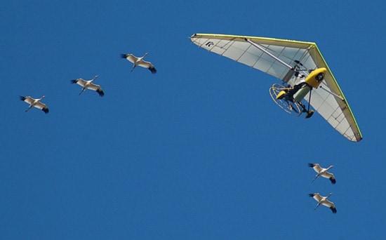 International Migratory Bird Day at Disney's Animal Kingdom