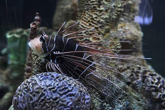 """Discover Creatures of the Sea at the """"Nemo Module"""""""