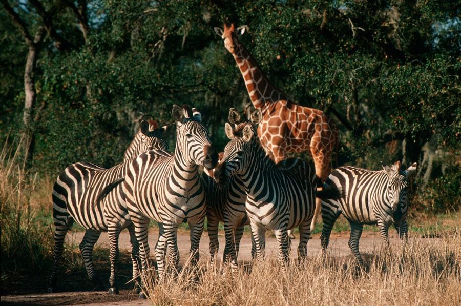Image result for animal kingdom animals