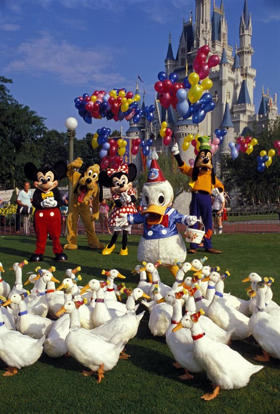 Caption This: Donald Throws a Party at Walt Disney World Resort