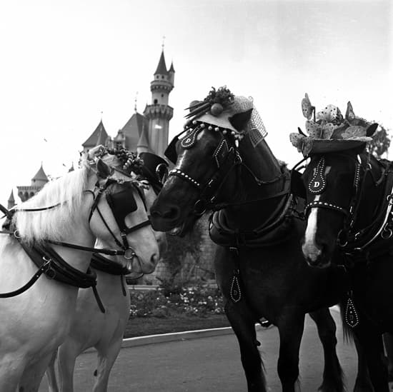 Caption This: Horses With Style at Disneyland Park