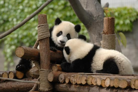 Experience China's Living Wonders With Adventures by Disney