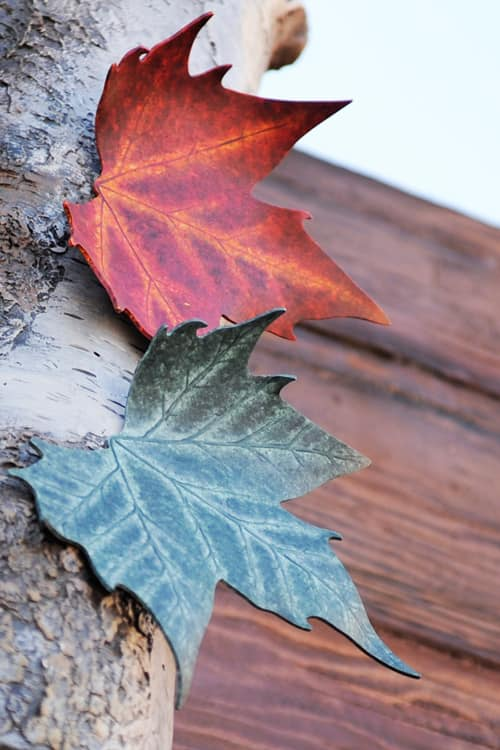 Have You Seen These Leaves at Disney Parks?