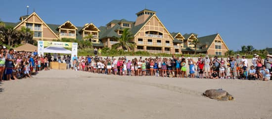 Sea Turtles Race to the Finish Line While Their Nests Hatch Near Disney's Vero Beach Resort