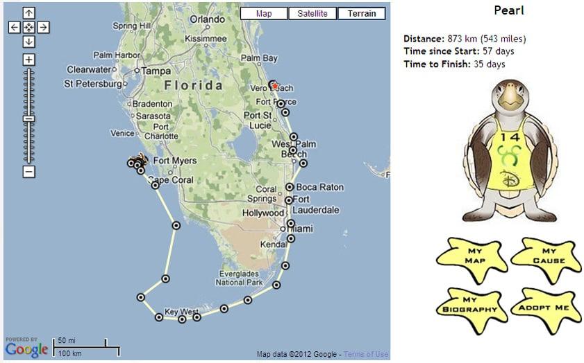 Vero Beach Florida Map.Wildlife Wednesdays Sea Turtles Race To The Finish Line While Their