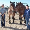 Horses Bug and Finn Join the Cast at Disneyland Resort