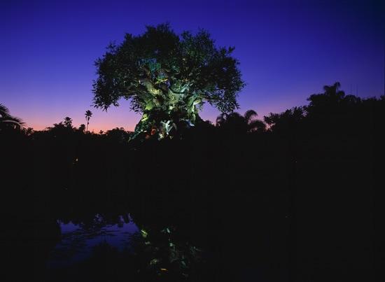 The Tree of Life at Disney's Animal Kingdom