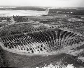 The Walt Disney World Resort Tree Farm in August 1969