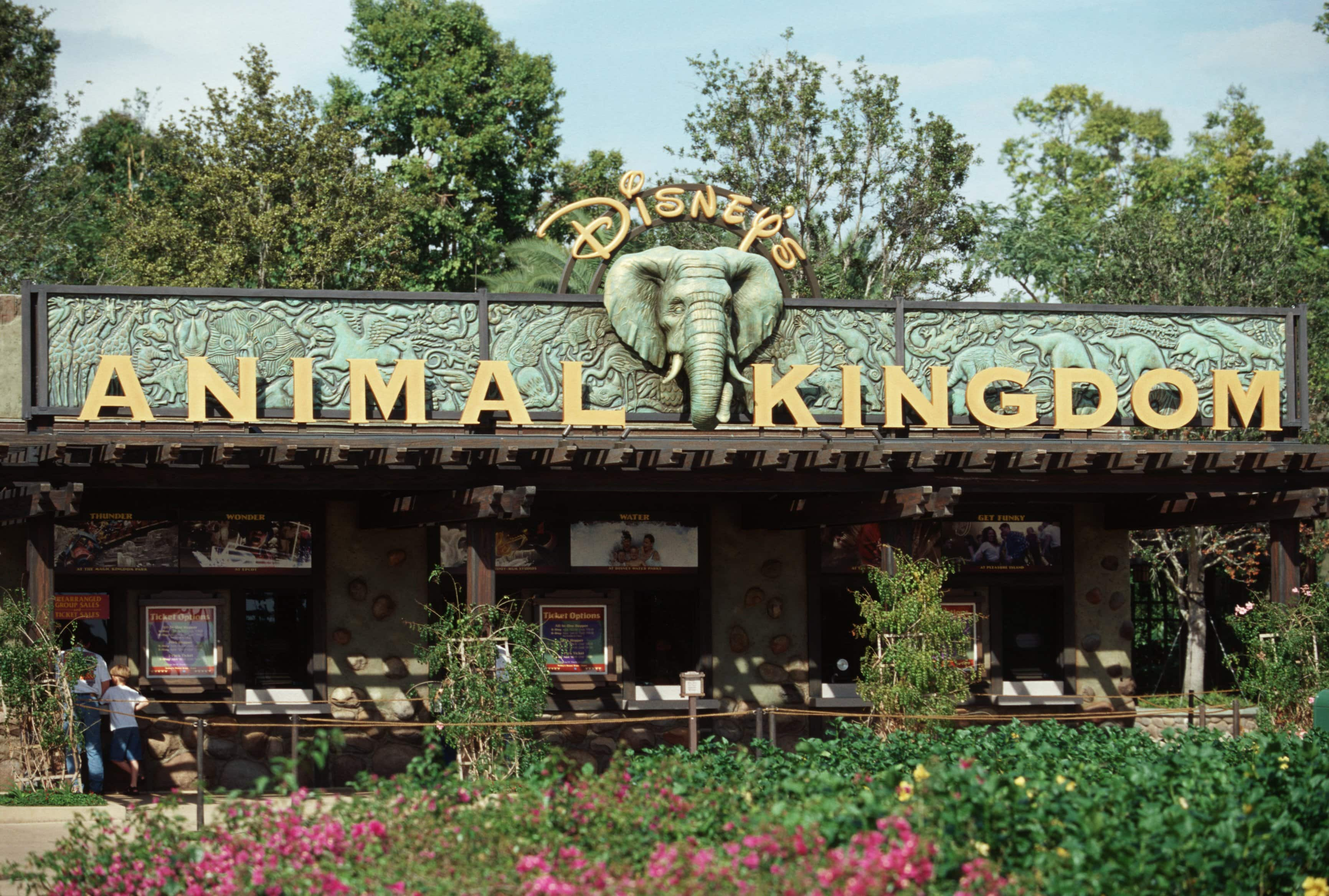 Sign Up For A Chance To Tour Backstage At Disney S Animal Kingdom Theme Park Disney Parks Blog