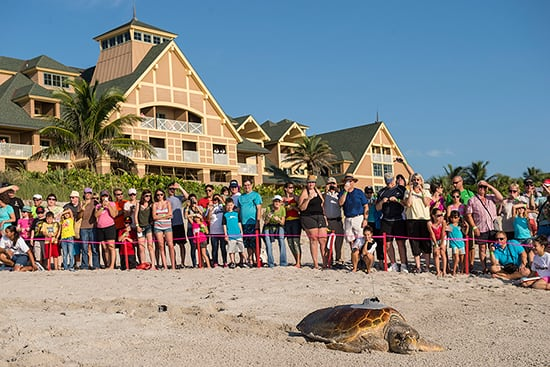 Wildlife Wednesdays: 99 Baby Sea Turtles for Tour de Turtles Mom at Disney's Vero Beach Resort