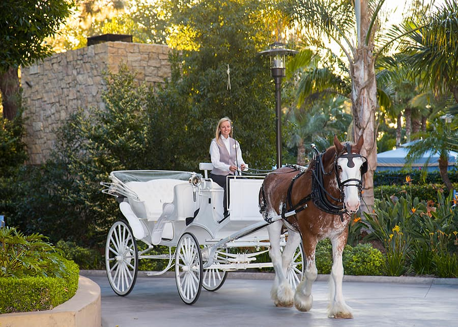Image result for disney world carriage rides