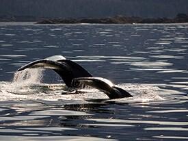 Wilderness Sea Kayaking Adventure With Disney Cruise Line in Alaska