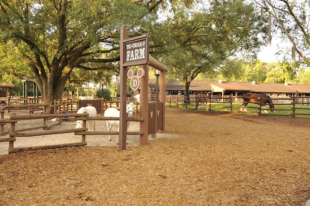 Lots of Fun Horsing Around at Tri-Circle-D Ranch at Walt Disney World Resort
