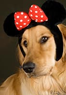 Show Your Pet's Disney Side on Animal Planet's 'America's Cutest'