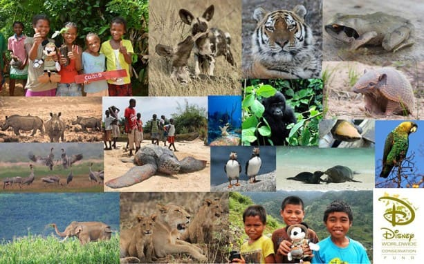 DWCF-2014-Funded-Projects