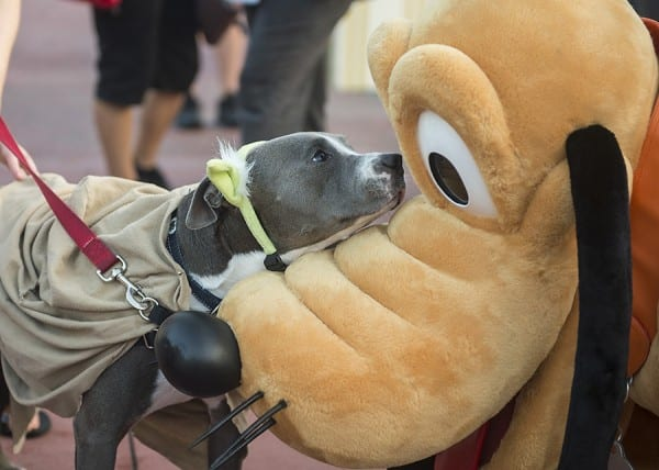 This Week in Disney Parks Photos: Cinderella Castle, More Disney Side Dog's Day at Magic Kingdom Park