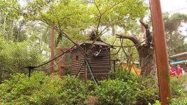 Cotton-top Tamarin Exhibit at Disney's Animal Kingdom