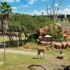 Room with a View: 'Safari View' Suite at Disney's Animal Kingdom Lodge
