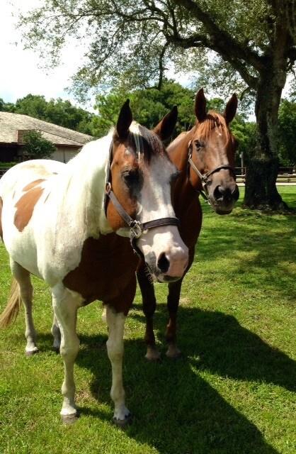 Ranch Horses 1