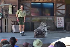 The Stage Show 'It All Started with a Mouse' at Rafiki's Planet Watch