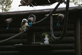 Cotton-Top Tamarins Experienced Snow on the Rooftop of their Home As Well!