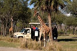 Wildlife Wednesday: Disney's Animal Kingdom and Disney's Animal Kingdom Lodge Set 'Gold Standard' for Animal Care