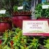 Amazing Container Gardens Seen at Walt Disney World Resort