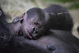 Wildlife Wednesday: Scientists Provide Great Care for Animal Moms and Babies
