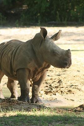 Wildlife Wednesday: Kiama Makes Her Big Debut