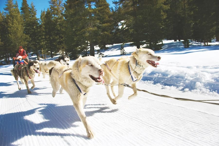 Go dog sledding in Wyoming with Adventures by Disney
