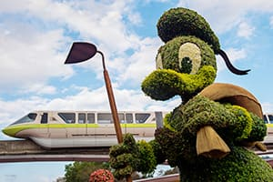Donald Duck Topiary at the Epcot Flower and Garden Festival at Walt Disney World Resort
