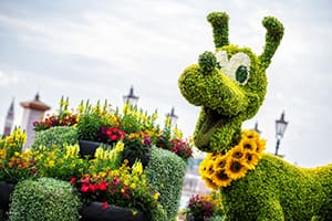 Pluto Topiary at the Epcot Flower and Garden Festival at Walt Disney World Resort