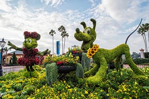 Minnie Mouse and Pluto Topiaries at the Epcot Flower and Garden Festival at Walt Disney World Resort