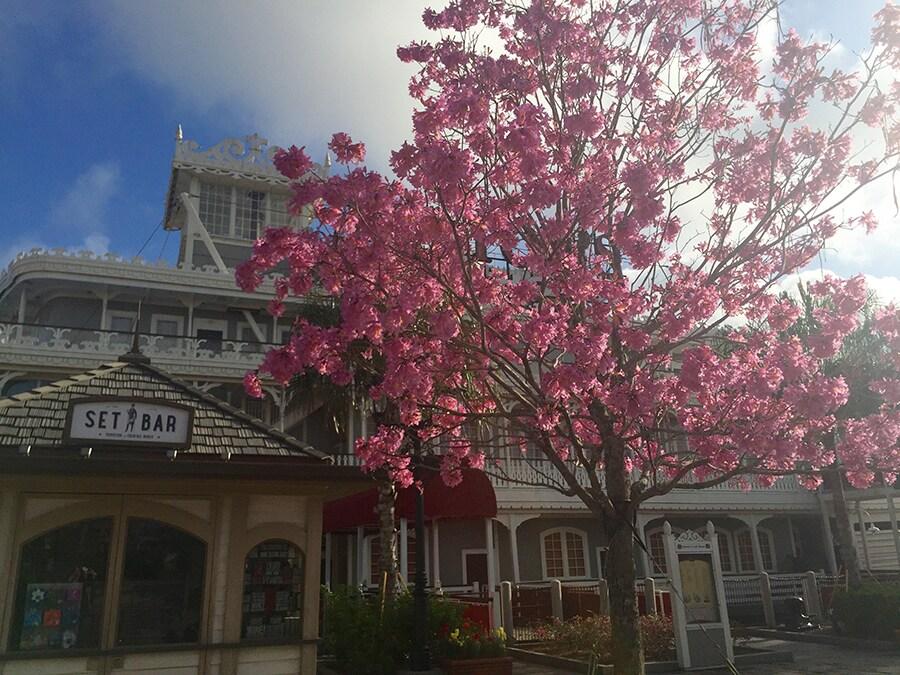 Spring Blooms at Disney Springs