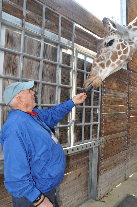 Ted Feeding a Giraffe on the New Sense of Africa Program at Disney's Animal Kingdom Lodge