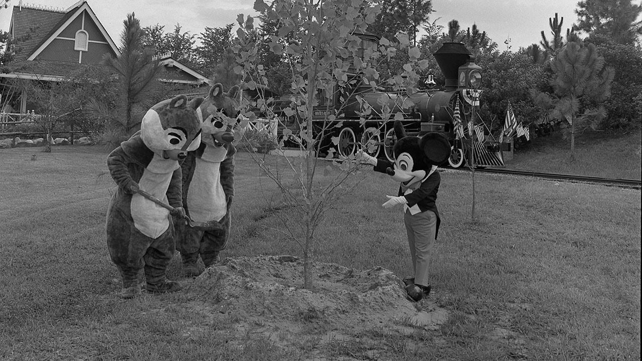 Disney Days of Past: Celebrating Arbor Day!