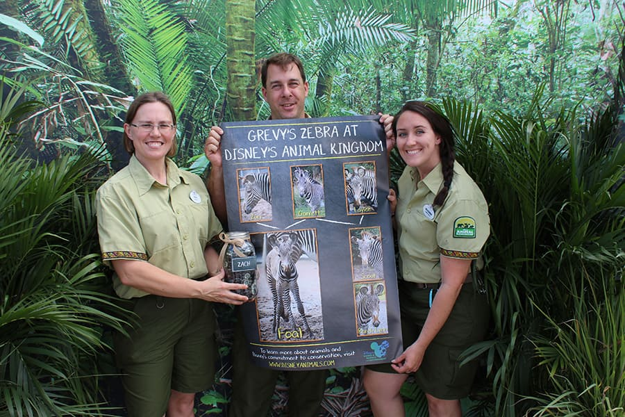 """Keepers Rain, Mike and Meaghan planned the zebra-naming event for Disney's Animal Kingdom Cast Members. They are seen here with the Grevy's zebra family tree while celebrating """"Zach"""" as the winning name for the new foal."""