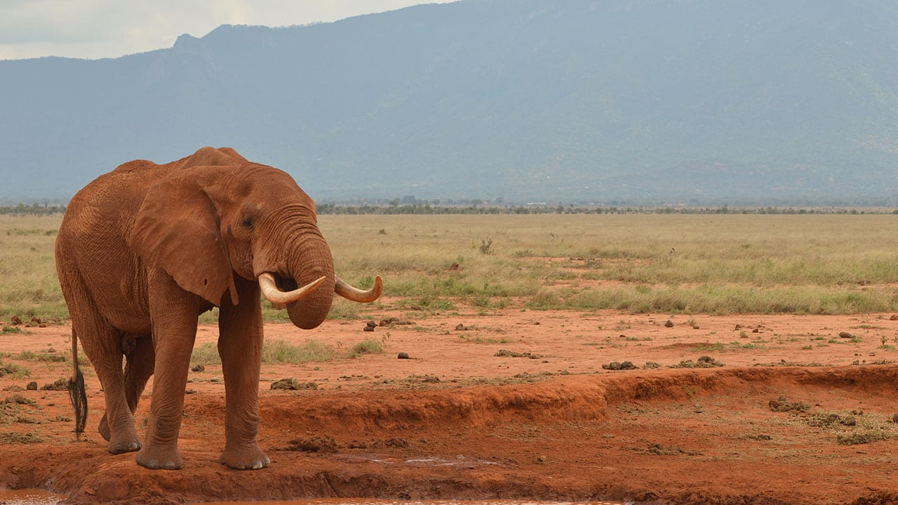 Wildlife Wednesday: Disney Helps 'Reverse the Decline' of Elephants