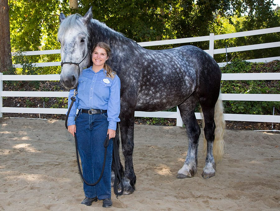 Meet the Newest Disneyland Resort Horses