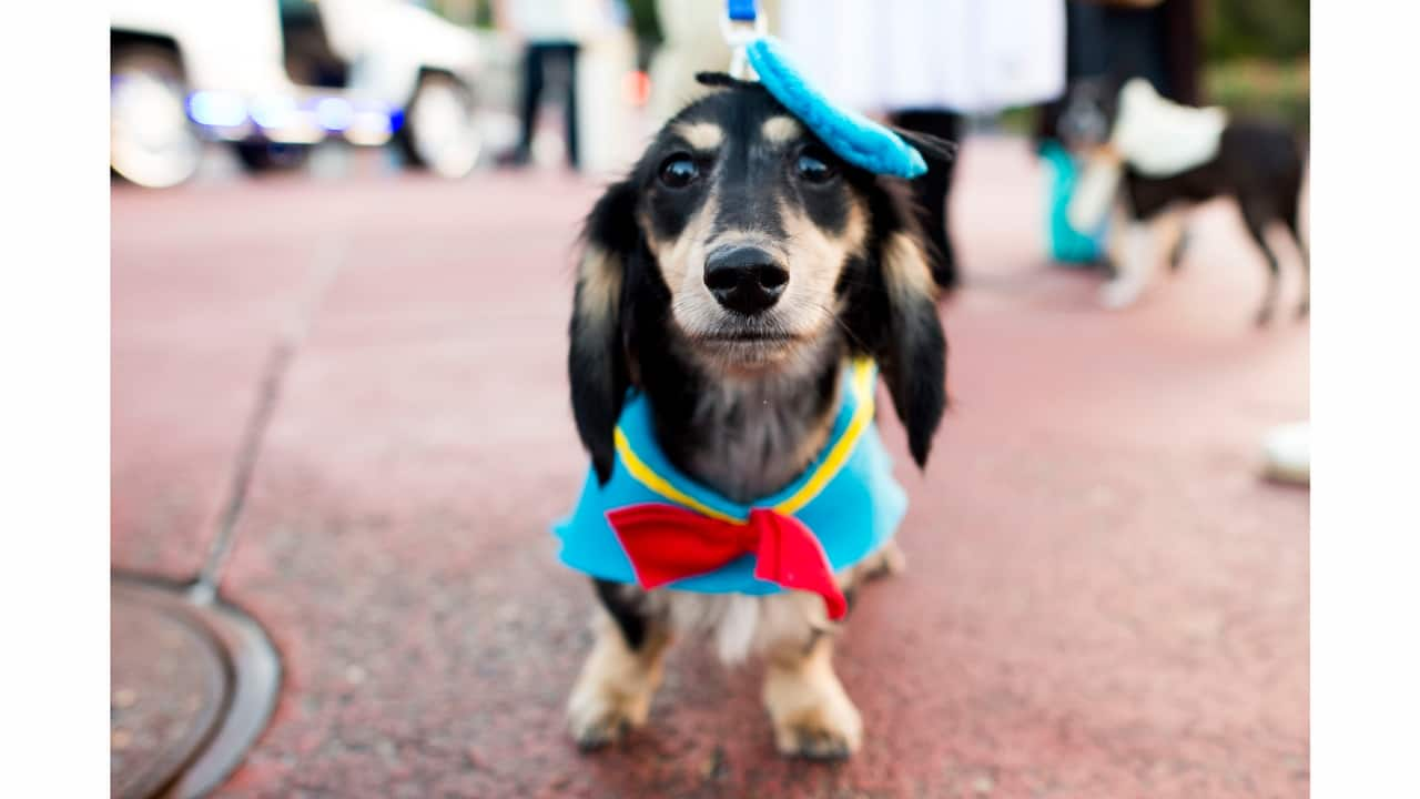 disney dog halloween costume ideas perfect for your pet | disney