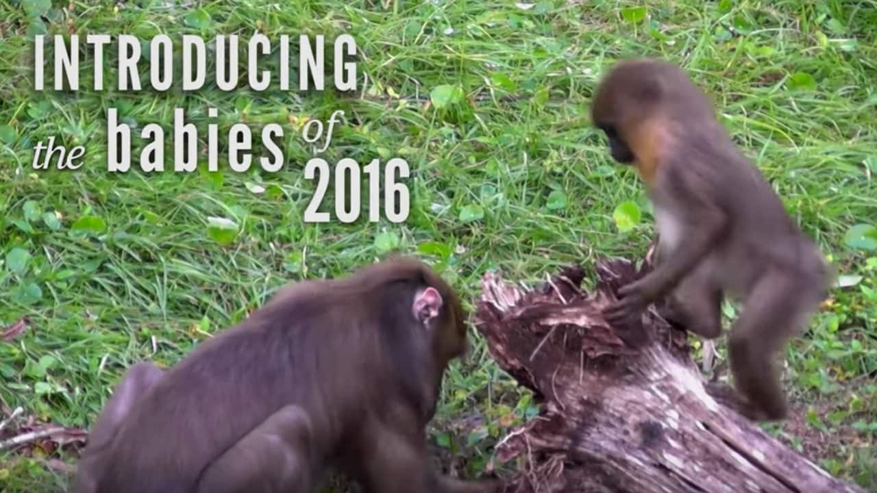 Wildlife Wednesday: Meet the babies born in 2016