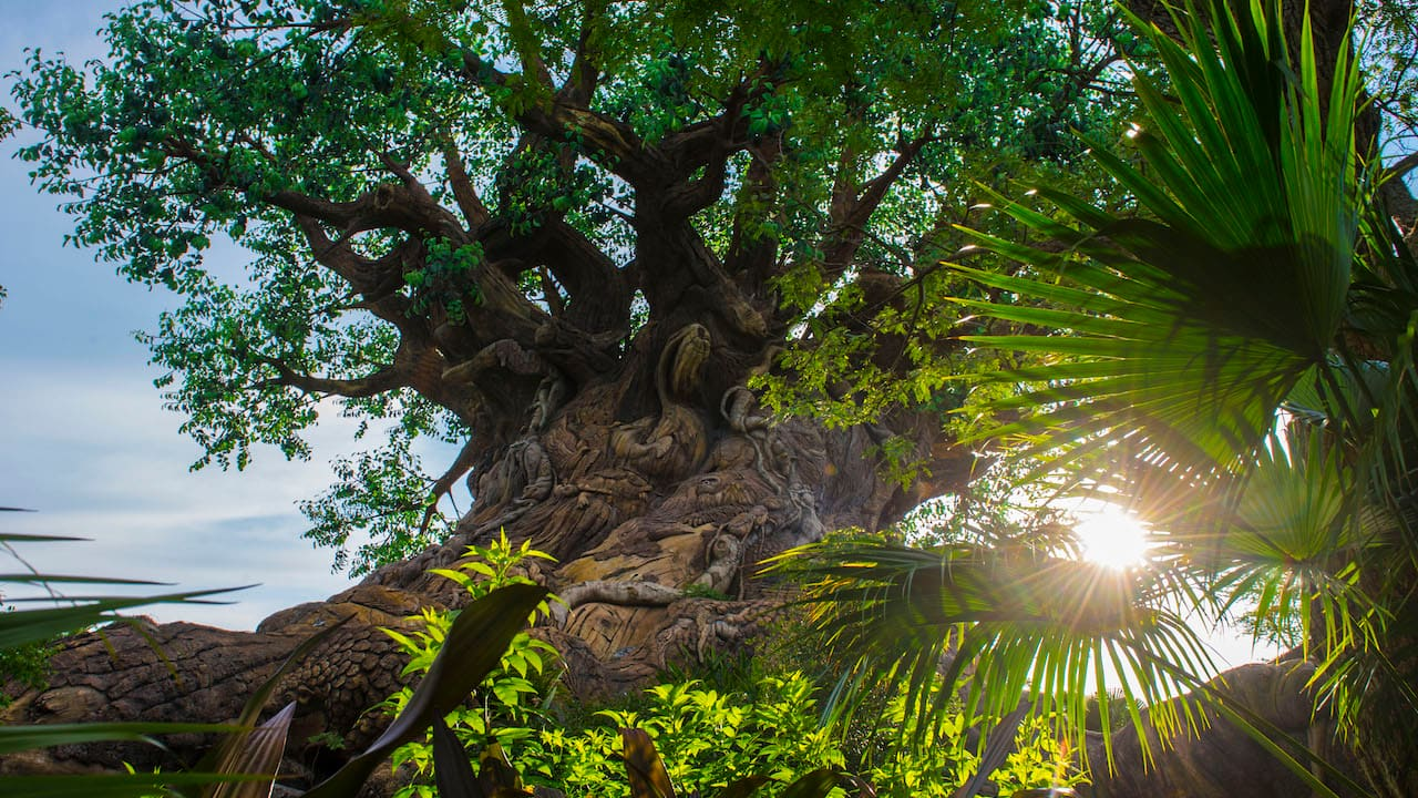 The Sun Is Bright at Disney's Animal Kingdom