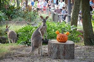 Wildlife Wednesday: Animals return to the Tree of Life